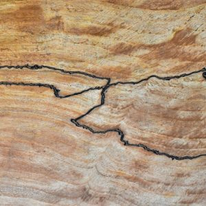 Holz Trüffelbuche