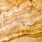 Holz Olivenbaum
